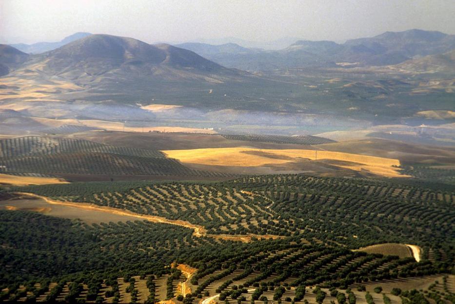 Pre-Campaña de la oliva 2018 Topavi en Talleres Vidal
